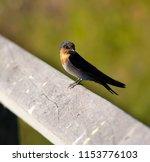 a dainty delightful  little... | Shutterstock . vector #1153776103