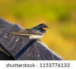 a dainty delightful  little... | Shutterstock . vector #1153776133