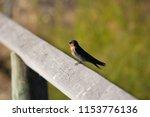 a dainty delightful  little... | Shutterstock . vector #1153776136
