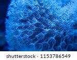 Abstract Blur Light Blue Round...