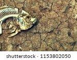 Fish Bone On Dry Cracked Soil....