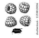raspberry vector drawing.... | Shutterstock .eps vector #1153813036