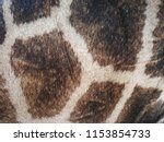 giraffe hair and skin | Shutterstock . vector #1153854733