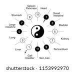 circadian clock of the main... | Shutterstock .eps vector #1153992970