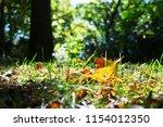 vibrant orange fallen autumn... | Shutterstock . vector #1154012350