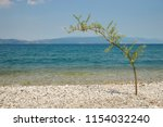 solitaire willow tree on a... | Shutterstock . vector #1154032240