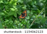 the small tortoiseshell  aglais ... | Shutterstock . vector #1154062123