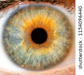 macro blue yellow  eyes   iris... | Shutterstock . vector #1154096440