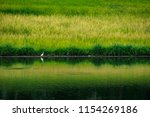 landscape of  pond in large... | Shutterstock . vector #1154269186