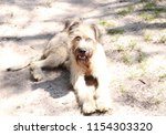 cute shaggy dog looks into the... | Shutterstock . vector #1154303320