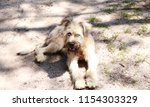 cute shaggy dog looks into the... | Shutterstock . vector #1154303329