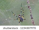 golden orb spider.kruger... | Shutterstock . vector #1154307970