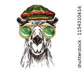 vector image of a camel in... | Shutterstock .eps vector #1154310616
