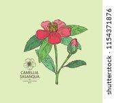 camellia sasanqua  camellia... | Shutterstock .eps vector #1154371876
