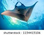 a huge majestic oceanic manta... | Shutterstock . vector #1154415106