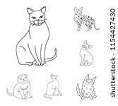 breeds of cats outline icons in ... | Shutterstock .eps vector #1154427430
