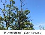 blue sky  clouds. tree tops. | Shutterstock . vector #1154434363