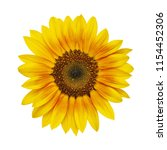 beautiful sunflower isolated on ... | Shutterstock . vector #1154452306