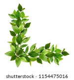 twigs with fresh green leaves... | Shutterstock . vector #1154475016