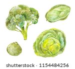 different varieties of cabbage. ... | Shutterstock . vector #1154484256