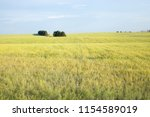 travel to natural places.... | Shutterstock . vector #1154589019