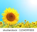 bright yellow sunflowers on on... | Shutterstock . vector #1154599303