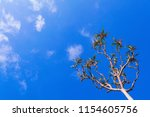 a pandan tree  also known as a...   Shutterstock . vector #1154605756