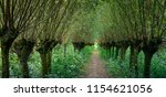 rows of pollard willows on both ...   Shutterstock . vector #1154621056