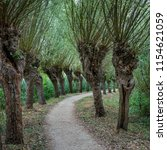 Small photo of Curved path with rows of gnarly pollard willow trees, late summer