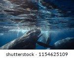 spermwhales closeup underwater... | Shutterstock . vector #1154625109