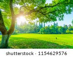 grass and green woods in the... | Shutterstock . vector #1154629576