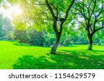 grass and green woods in the... | Shutterstock . vector #1154629579