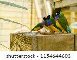 the gouldian finch  erythrura... | Shutterstock . vector #1154644603