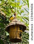the gouldian finch  erythrura... | Shutterstock . vector #1154644606