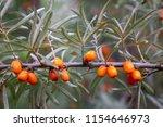 seabuckthorn berries. in the... | Shutterstock . vector #1154646973