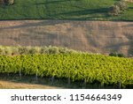 panoramic view of olive groves  ... | Shutterstock . vector #1154664349