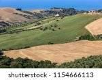 panoramic view of olive groves... | Shutterstock . vector #1154666113