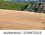 panoramic view of olive groves  ... | Shutterstock . vector #1154672113
