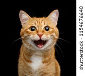 Stock photo funny portrait of happy smiling ginger cat gazing with opened mouth and big eyes on isolated black 1154676640