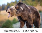 North American Brown Bear ...