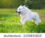White Funny Beautiful Fluffy...