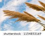 close up of straw yellow pale...   Shutterstock . vector #1154853169