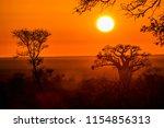 baobab tree in sunrise... | Shutterstock . vector #1154856313