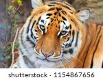 beautiful close up portrait of... | Shutterstock . vector #1154867656