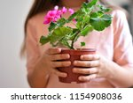 girl take pot with pink flower   Shutterstock . vector #1154908036