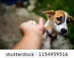 little dog  gives paw to human... | Shutterstock . vector #1154959516
