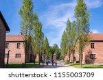 auschwitz birkenau...   Shutterstock . vector #1155003709