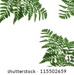 green leaf isolated on a white... | Shutterstock . vector #115502659