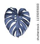 monstera leaf. blue leaf. ... | Shutterstock . vector #1155055003