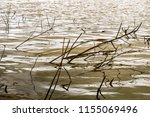 Dead Tree Branches In A Water...